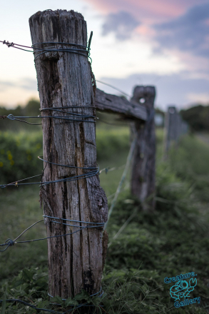 Fence post next to farmer's field