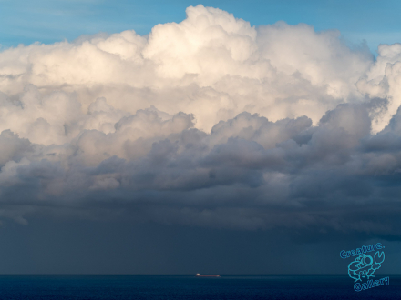 Oil tanker in the ocean in front of cumulous cloud