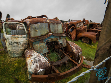 Rusting cars sit in a field