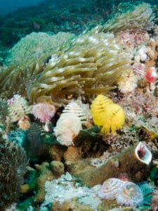 Christmas Tree Worms at Stradbroke Island