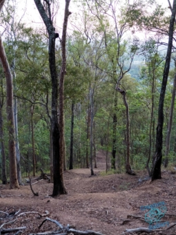 Trees at Mount Cootha