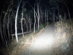 Gum Tree has crashed across Mount Cootha path